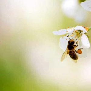 Come allontanare in sicurezza vespe e calabroni ?